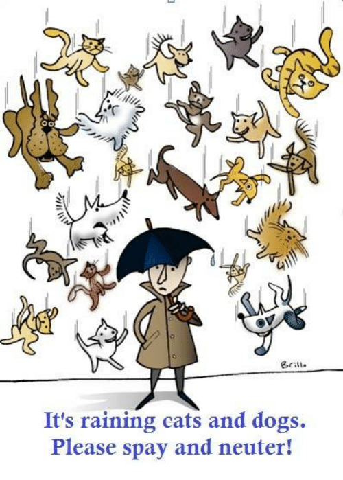 Raining cats and Dogs