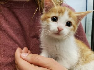 Welcome to the Humane Society of Warren County, Virginia